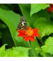 Květinová směs pro motýly - semena - 3 gr