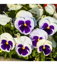 Maceška Silberbraut - Viola wittrockiana - semena - 200 ks
