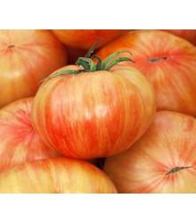 Rajče Copia - Solanum lycopersicum - semena - 7 ks