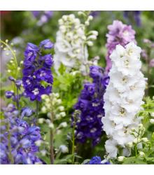 Stračka zahradní hyacintokvětá směs - Delphinium ajacis - semena - 300 ks