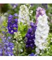 Stračka zahradní hyacintokvětá směs - Delphinium ajacis mix - semena - 0,8 gr