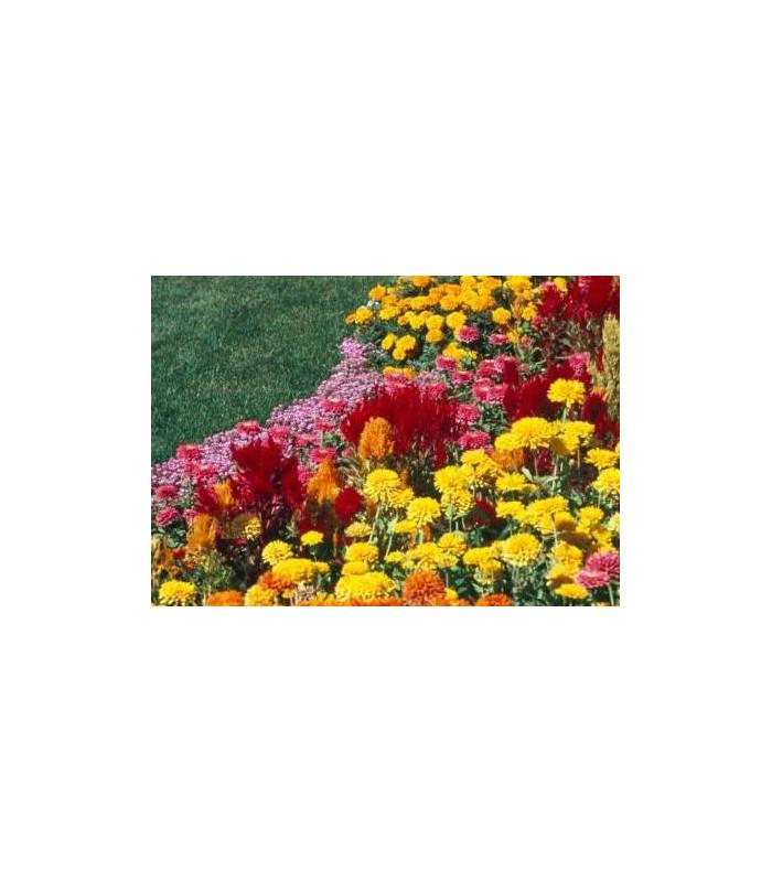 Letničky polovysoké směs- semena letniček- 0,9 g