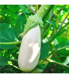 Lilek bílý Casper - Solanum melongena - semena - 7 ks