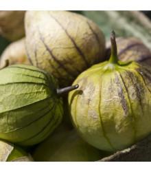 Tomatillo Cisineros - Physalis ixocarpa - semena tomatilla - 7 ks