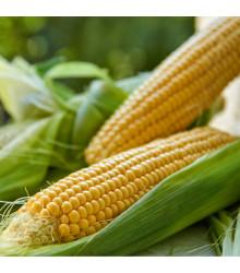 Kukuřice setá Tatonka F1 - Zea Mays L. - semena - 15 ks