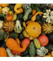 Tykev velkoplodá Gourmet - Cucurbita maxima - semena - 4 ks