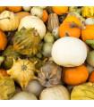 Okrasné tykvičky - Cucurbita pepo - semena - 3 gr
