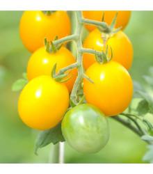 Rajče žluté Golden Currant F1 - Lycopersicon esculentum - semena - 5 ks