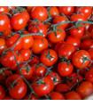 Rajče Cherolla F1 tyčkové - Lycopersicum esculentum - semena - 5 ks