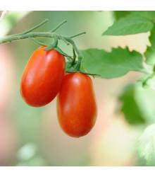 Rajče hybridni tyčkové Ravello F1 - Lycopersicum esculentum - semena - 4 ks
