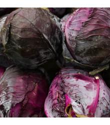 Zelí hlávkové červené Cabeza negra 2 - Brassica oleracea - semena - 200 ks