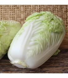 Zelí pekingské Granaat - Brassica pekinensis - semena - 200 ks