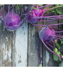 Kedluben raný modrý Purple Vienna - Brassica oleraca - semena - 0,3 g