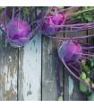 Kedluben raný modrý Purple Vienna - Brassica oleraca - semena - 50 ks