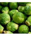 Kapusta růžičková Dolores F1 - Brassica oleracea - semena - 40 ks