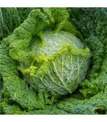 Kapusta hlávková k rychlení Raketa - Brassica oleracea var. sabauda - osivo kapusty - 250 ks