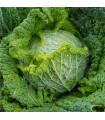 Kapusta hlávková k rychlení - Raketa - Brassica oleracea var. sabauda - semena - 0,8 g
