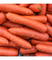 Mrkev Nantaise raná - Daucus carota - semena - 900 ks