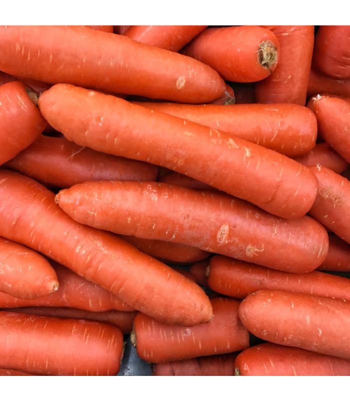 Mrkev Nantaise raná - Daucus carota - semena - 1 g