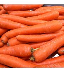 Mrkev obecná dlouhá červená - Daucus carota - semena - 1 g