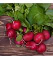 Ředkvička Topsi - prodej semen ředkvičky - 0,5 gr