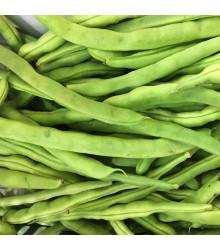 BIO fazole keříčková Maxi - Phaseolus vulgaris - bio semena - 20 ks