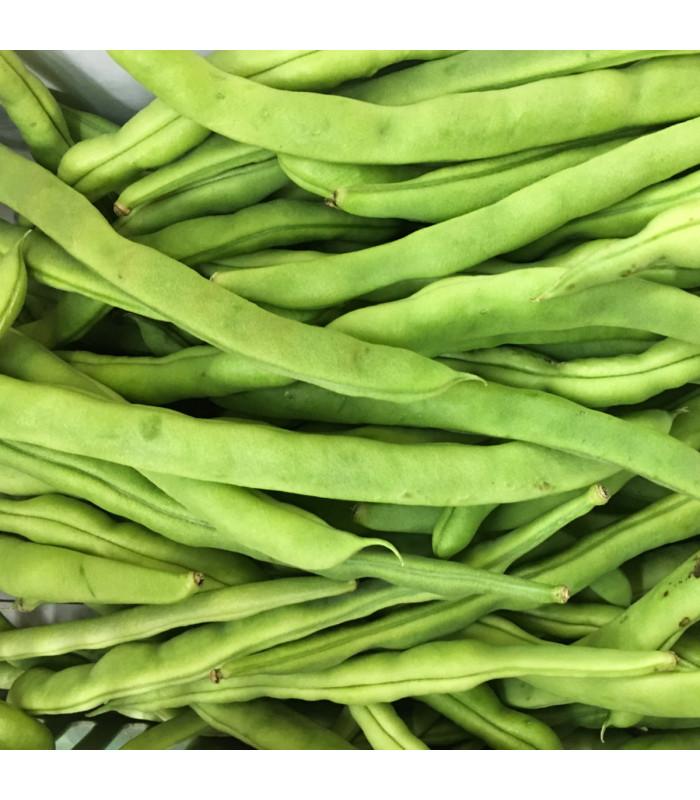 BIO fazole keříčková Maxi - Phassseolus vulgaris - semena - 5 ks