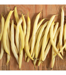 Fazol keříčková Sonesta - Phaseolus vulgaris - semena fazolí - 20 ks