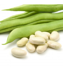 Fazol keříčkový Dublette - Phaseolus vulgaris var. nanus - semena - 20 ks