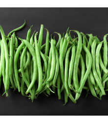 Fazol tyčkový Primel - Phaseolus vulgaris - semena - 20 ks