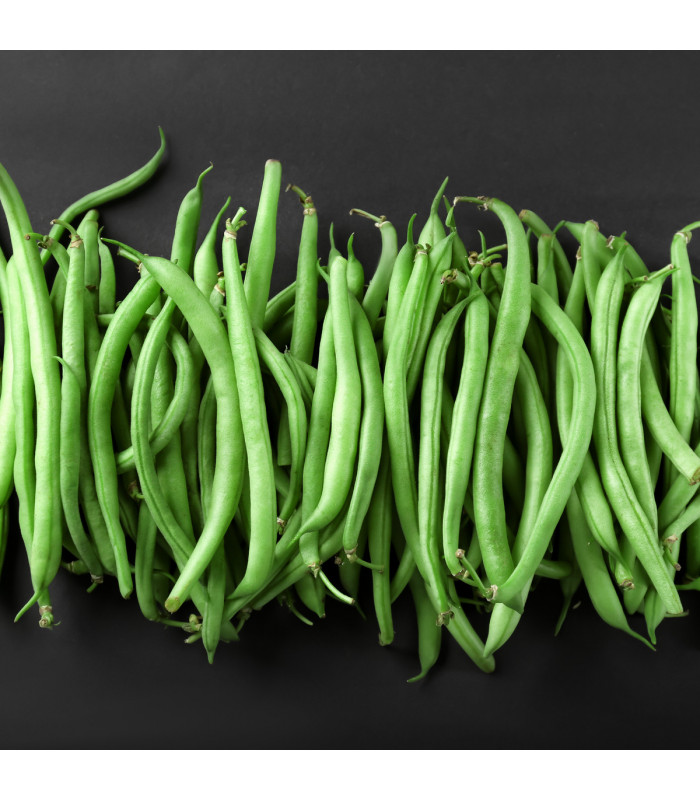 Fazol tyčkový Primel - Phaseolus vulgaris - semena - 2 gr
