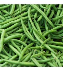 Fazol keříčkový Saxa - Phaseolus vulgaris - semena - 3 gr