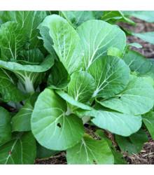 Hořčice salátová Misome F1 - Brassica campestris - semena - 20 ks