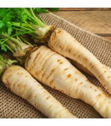 Petržel kořenová - Petroselinum crispum - semena - 1 g