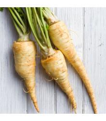 Pastinák setý Halblange- Pastinaca sativa - semena - 1 g