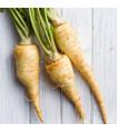 Pastiňák setý - Pastinaca sativa - semena - 1 g
