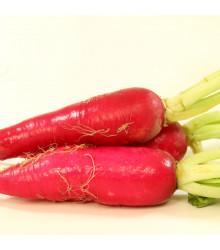 More about Ředkev Rosa - Raphanus sativus - osivo ředkve - 1,5 g