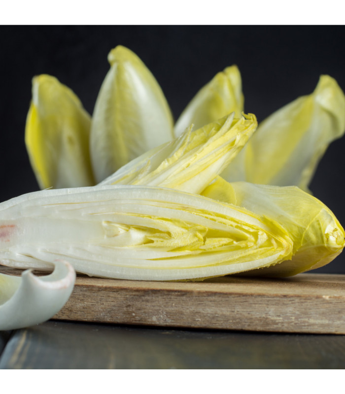 Čekanka belgická Di Bruxelles - Cichorium intybus - semena - 0,5 gr