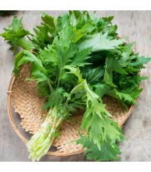 Namenia - Brassica rapa - semena - 200 ks