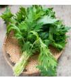 Namenia - Brassica rapa - semena - 0,5 g