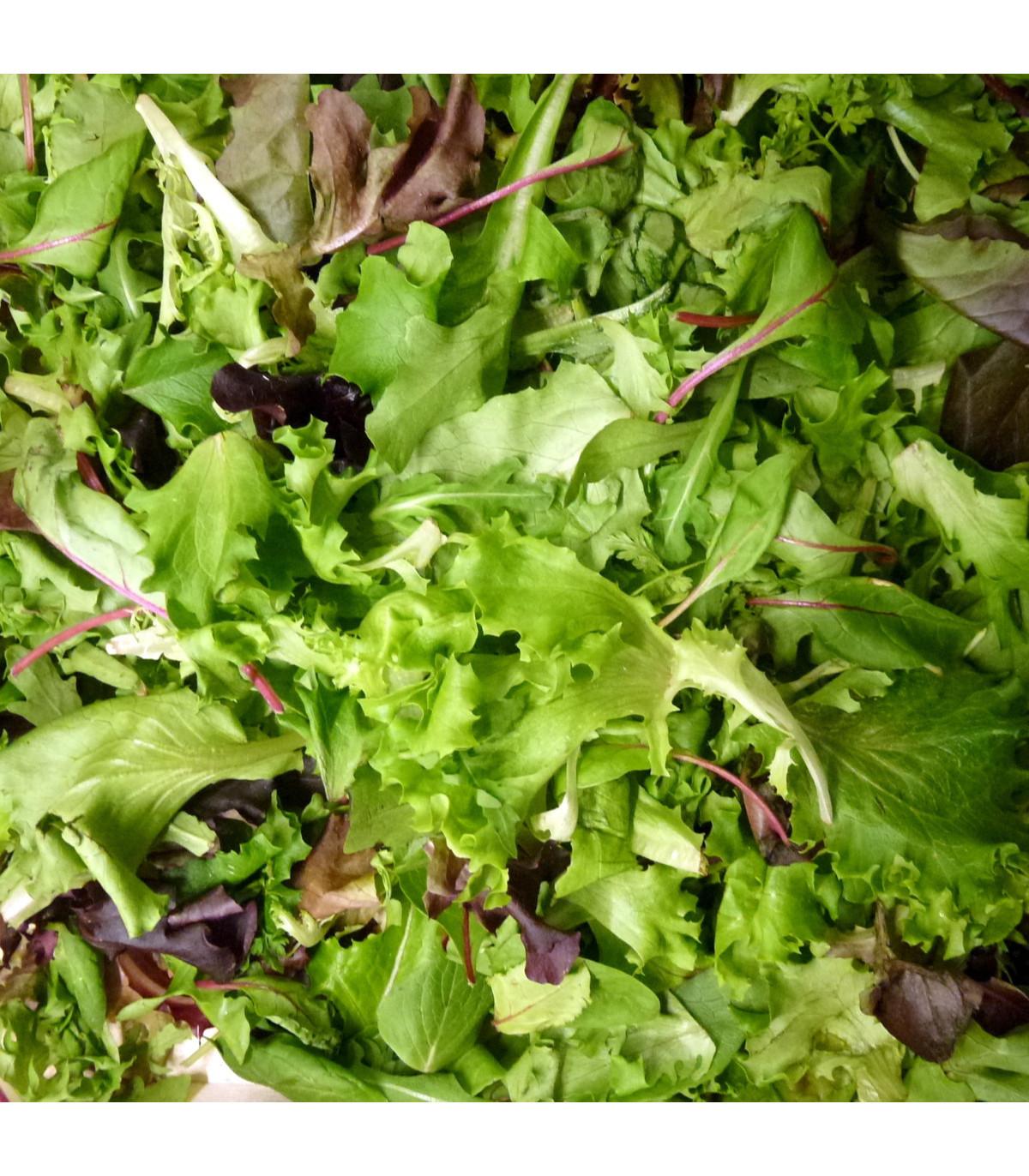 Mix orientálních salátů - semena - 50 ks