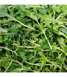 BIO rukola Roma - Eruca sativa - bio semena rukoly - 0,1 g