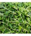 BIO rukola Roma - bio semena rukoly - 0,1g