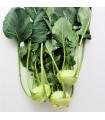 BIO osiva - Kedluben Noriko - Brassica oleracea convar. gongylodes - bio semena - 0,3 gr