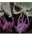 BIO kedluben Azur - Brassica oleracea L. - bio semena - 0,3 gr