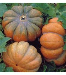 Bio Dýně Muscat De Provence - Cucurbita moschata - semena - 5 ks
