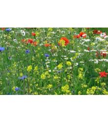 Vytrvalé květy pro včely - semena - 50 g