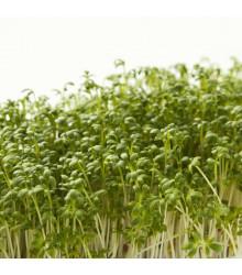 Řeřicha zahradní Dánská - Lepidium Sativum - semena - 850 ks