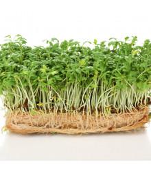BIO Řeřicha Kresso - Lepidium sativum - bio semena - 150 ks