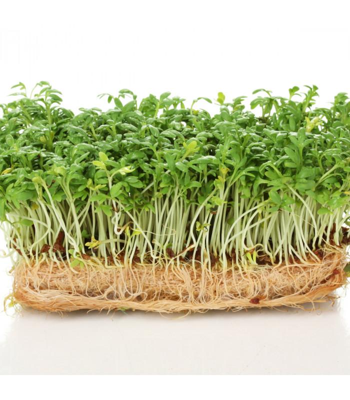 Prodej bio osiva - Řeřicha Kresso - bio osiva řeřichy - 0,5 gr